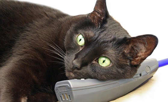 10-cat-with-phone-2