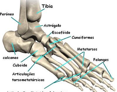 pés-anatomia-399x315
