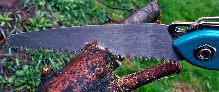 Uma serra cortando o galho